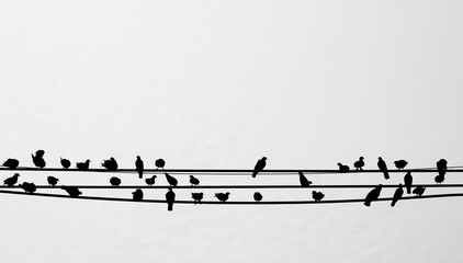 silhouette of birds sitting on a telephone line