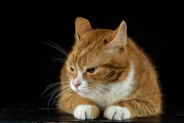 pensive red cat lying on a wooden board on a black background