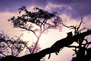 silhouette of leopard on tree