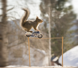 red squirrel in the air with a police motorcycle