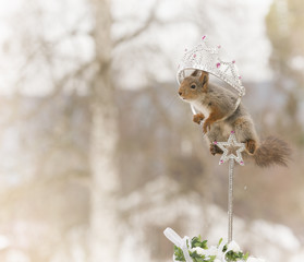 red squirrel on an cane in a crown