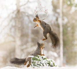 red squirrels on a cane with an crown
