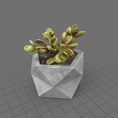 Cactus in concrete planter