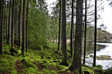 Forest in Horred