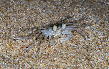 small crab on the beach