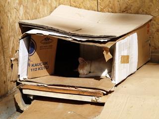 schlafende Katze in Kiste