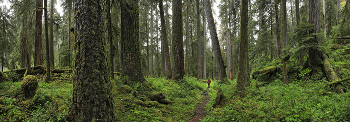 Scenery of Hoh rainforest, Washington State, USA