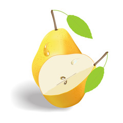 vector image of two yellow pears