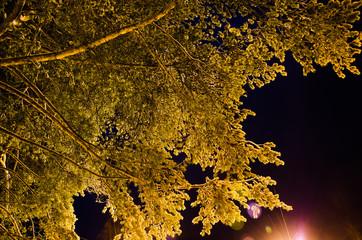 Snowed pine tree branches illuminated by street light against dark night sky.