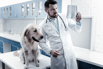 Medical diagnostics. Serious nice smart doctor standing near his dog and looking at the X ray image while putting a diagnosis