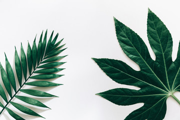 Green tropical  leaves isolated on white background