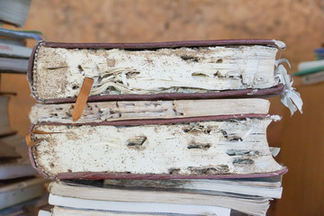 Books destroyed by termites