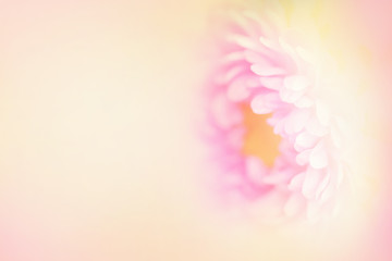 The softest flower.  Soft blurred petals in pink and yellow with a large text area on the left.