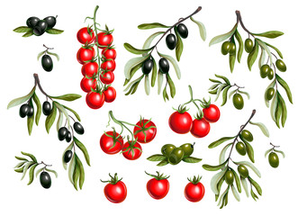 Black  olives branches and cherry tomato isolated on white background, Vector illustration.