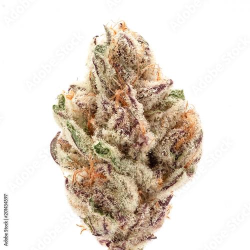 Purple Punch - Medical Cannabis Weed Bud