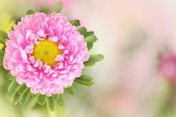 A beautiful pink flower with a blurred background on the right side for text.