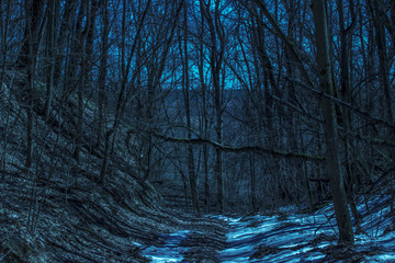 beautiful night in a fantastic and mysterious forest