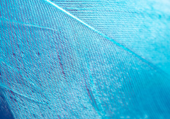 Blue feather as an abstract background