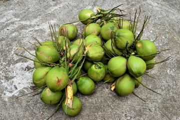 Bunch of coconut,Tropical fruit with green peel,Thailand