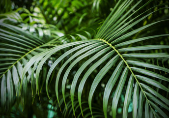 Green tropical palm leaves background