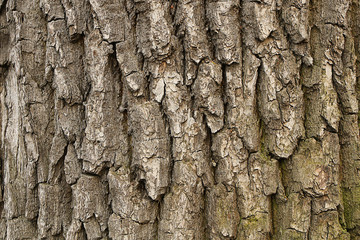 Wooden texture. Fragment of tree trunk with bark
