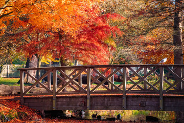 Wooden bridge in bushy park with autumn scene in  London