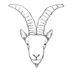 Outline hand-drawing animal head vector logo icon illustration