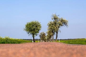 eine lange Straße mit vielen Kirschbäumen
