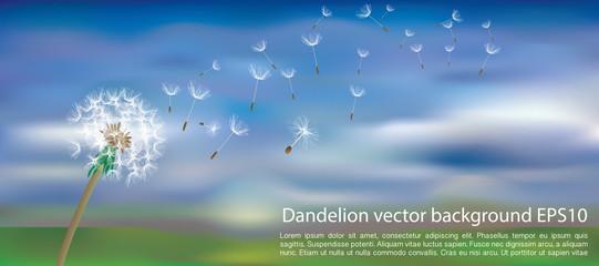 dandelion blur clouds