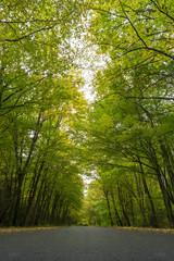 Road in autumn deciduous forest.