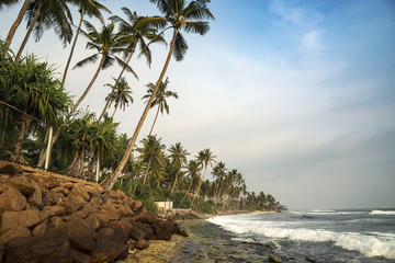 Palm tree lined beach, Polhena, Southern Province, Sri Lanka