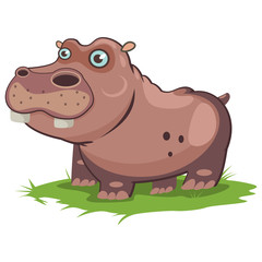 Hippo animal cartoon vector illustration isolated on white background.