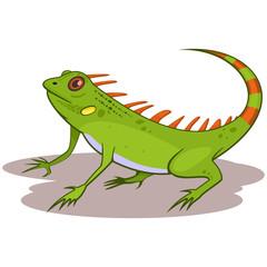 Iguana reptile cartoon vector illustration isolated on white background.