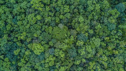 Aerial top view forest, Texture of forest view from above. Wall mural