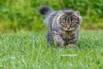 Kleine Katze die im Gras spielt_002