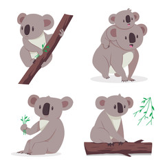 Cute koala bear with a baby on a eucalyptus tree. Vector cartoon flat set of animal characters isolated on white background.