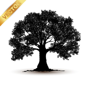 tree silhouette isolated on white background.