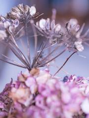 Purple Flowers2