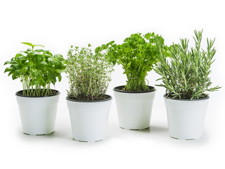 Herbs in pots over white background