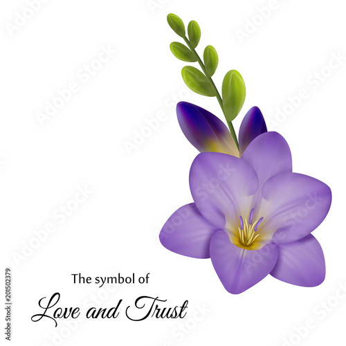 Realistic Violet Freesia The Symbol Of Love And Trust Stock Image