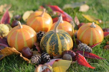 pumpkins, bumps and chestnuts