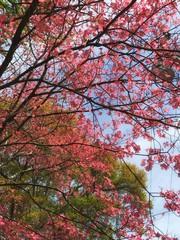 Bright pink blossom tree