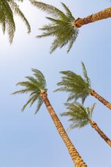 Palms on the beach at Sharm El Sheikh