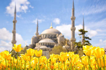 Tulip Festival in Sultanahmet Square and Blue Mosque, Istanbul