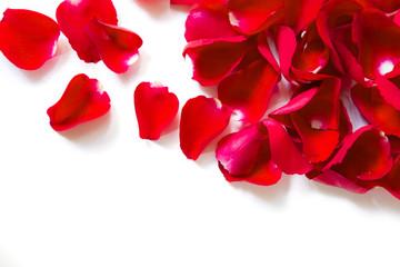 Petals of red roses