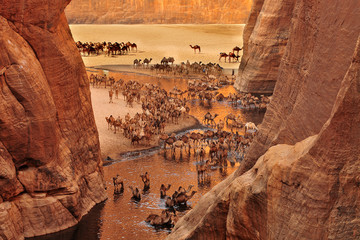Obraz The Guelta d'Archei located in the Ennedi Plateau, in north-eastern Chad  - fototapety do salonu