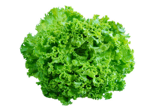 Organic Loose leaf lettuce on white background