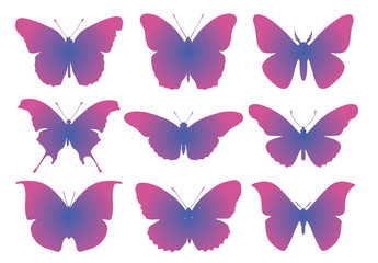 vector butterflies beauty