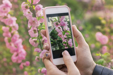.Girl takes pictures of beautiful pink spring flowers