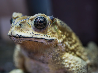 close-up toad on blured background